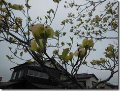 H26年4月18日近辺風景 014